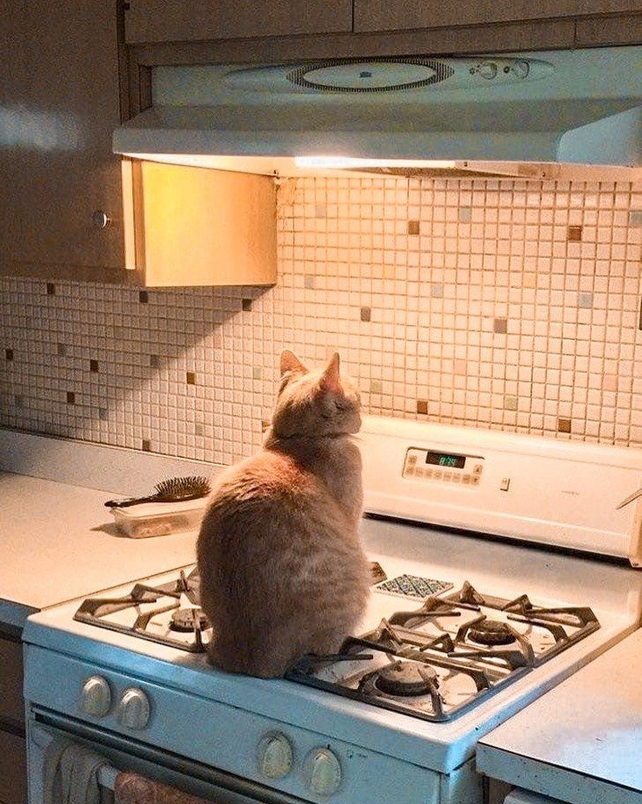 Фартук кухни